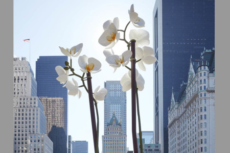Isa Genzken makes oversized orchids in New York