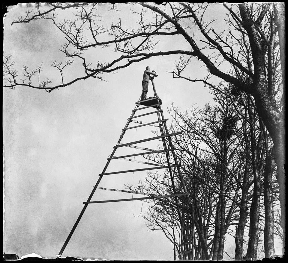 Vogelfotografie van de bovenste plank, Sloten, 1933 © Jan Pieter Strijbos / Nederlands Fotomuseum