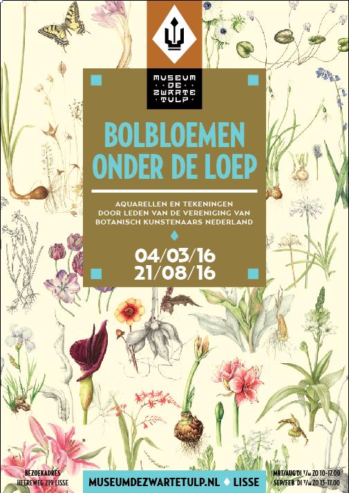 Museum De Zwarte Tulp - Bolbloemen onder de loep
