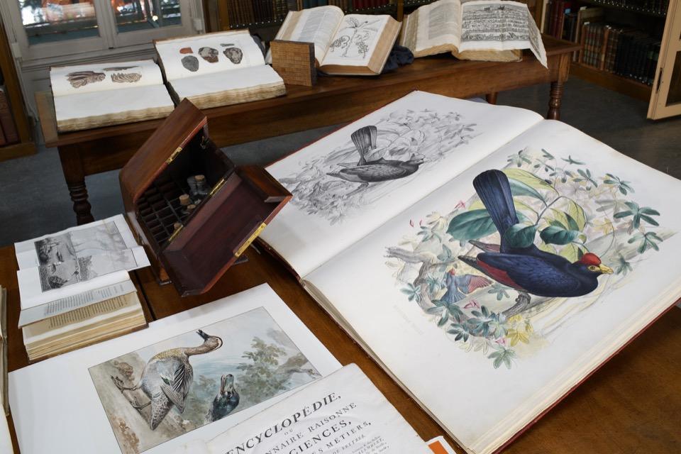 Boeken Artis Bibliotheek