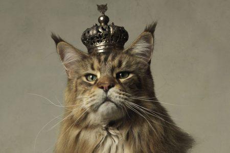 Kattenliefde – Negen levens in de kunst