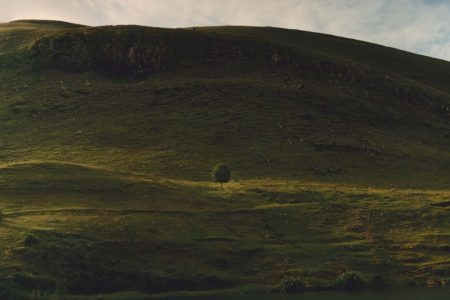 Landscape with Tree / by Jamie Hawkesworth