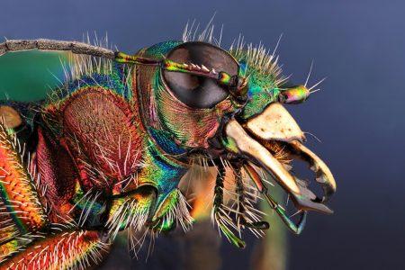 Levensgrote insecten in ARTIS